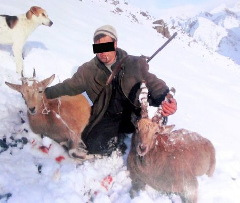 Chasseur des Marco Polos