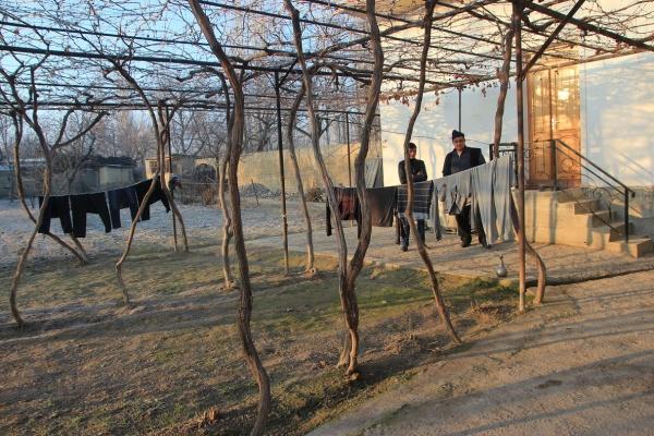 vignes khalmion kirghizstan crépuscule