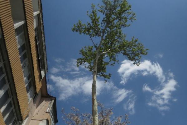 arbres Tachkent Ouzbekistan pétitions